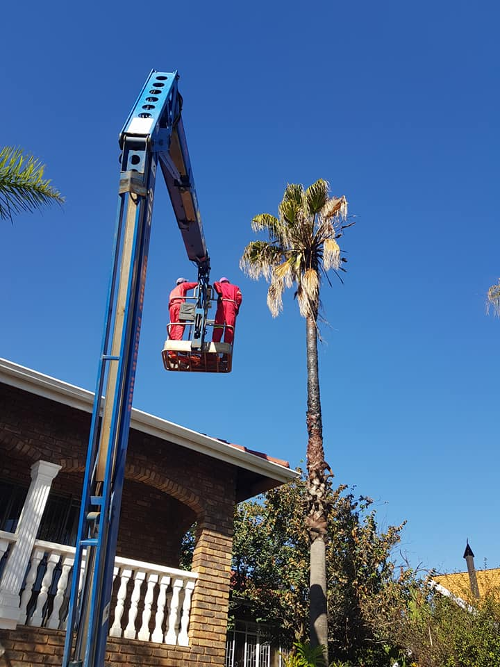 Palm Trimmers